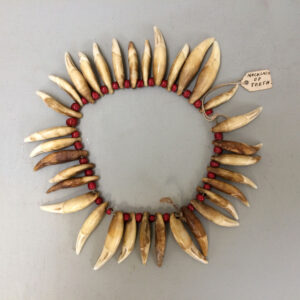 North American Indian Necklace of Coyote teeth